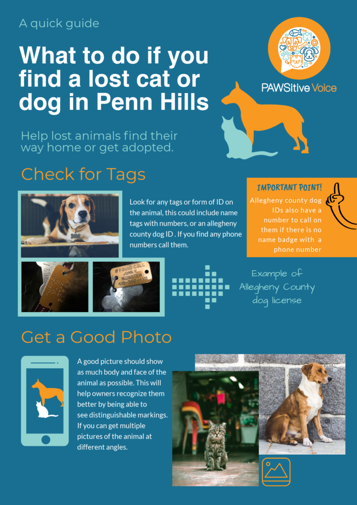 What to do if you find a lost cat or dog in Penn Hills
